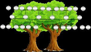 arbre genealogique d'une famille recomposée avec remariage