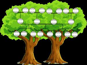 l'arbre généalogique réinventé d'une famille recomposée